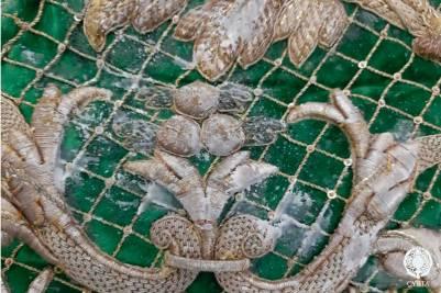 Intervención del manto camaronero de la Macarena